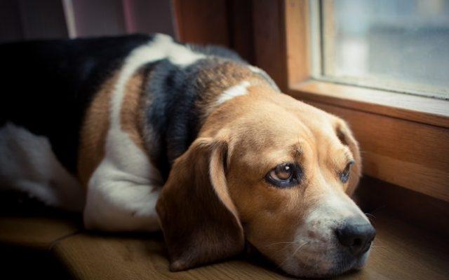 Leishmaniose pode levar humanos e cães à morte