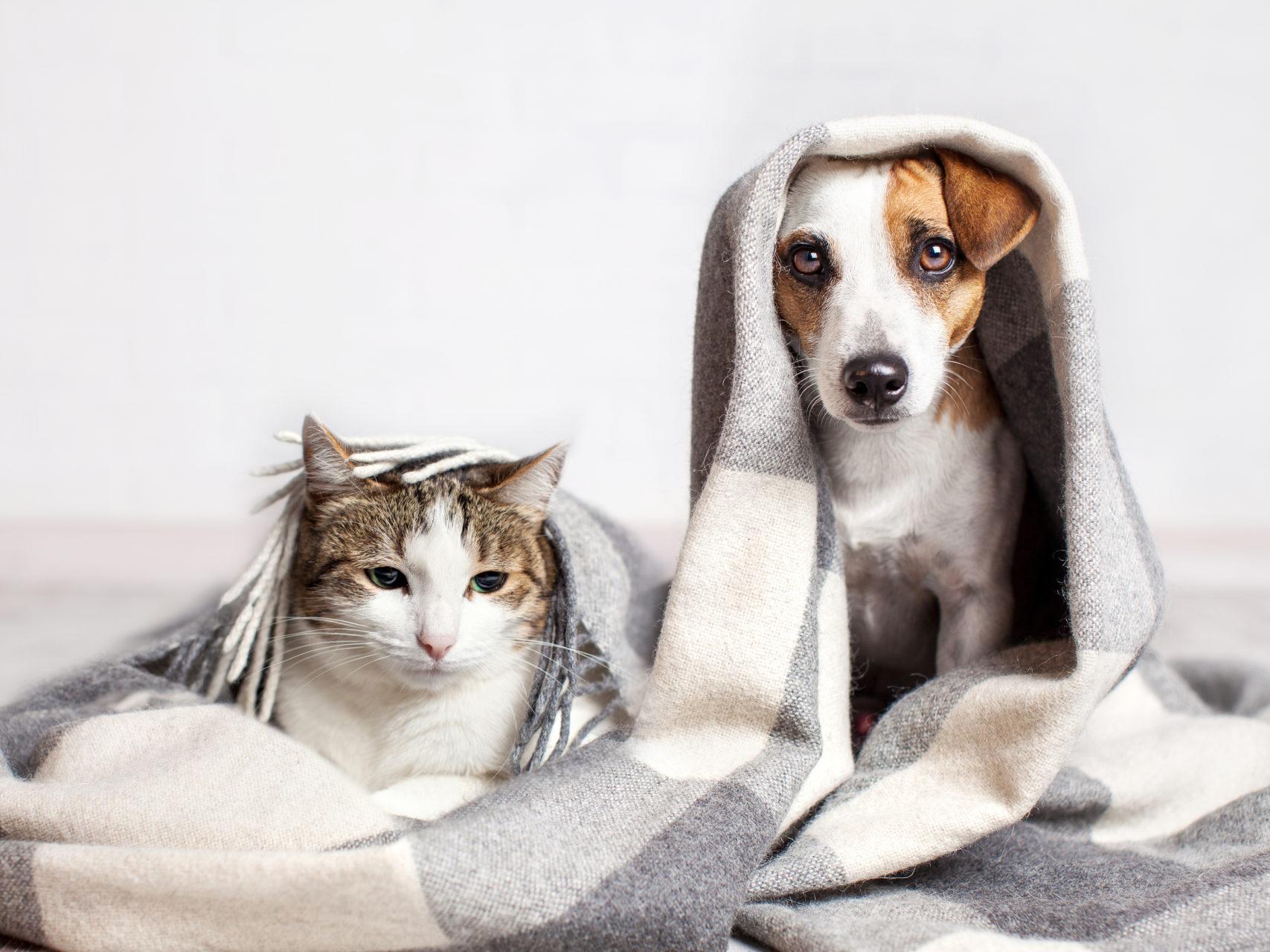 Ser humano também pode transmitir doenças aos pets