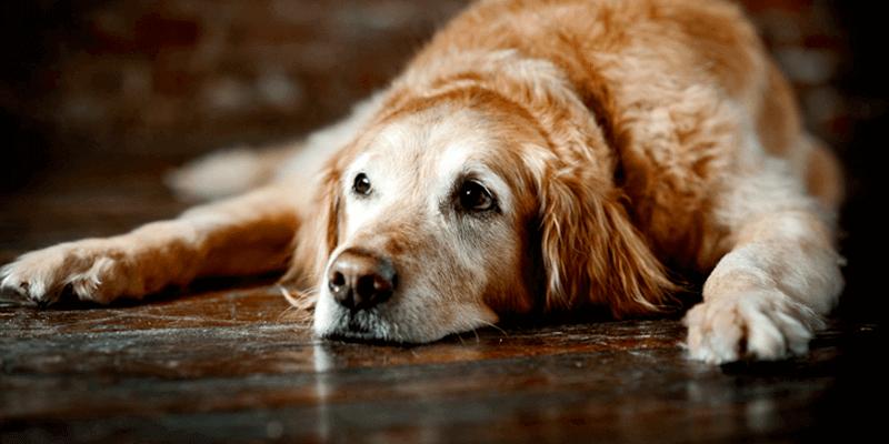 Pets idosos exigem cuidados e carinho redobrados